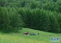 3代造林人获世界赞誉