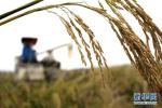 辽宁粮食生产再获丰收 成历史第二高产年