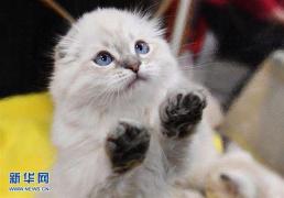 楊貴妃真的養貓嗎?看完你就知道了