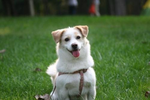 新金沙国际娱乐场网址:济南:犬只未按期登记防疫 主人或受双处罚
