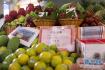 潍坊诸城蔬菜大棚结出热带水果 商贩上门寻商机