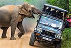 大象偷袭游客求食