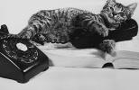 双语阅读:猫咪教给我们的那些事