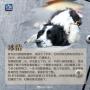 英雄搜救犬