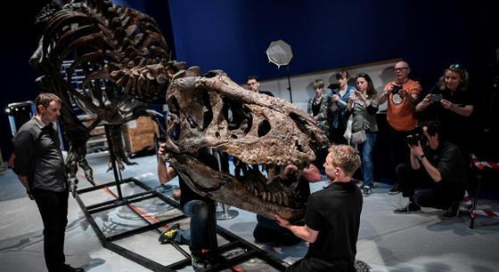 巴黎展出最完整霸王龙化石 尖牙利齿令人生畏