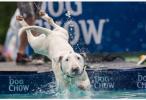 救助者谈城市流浪犬:狗主人觉得它们不会吵不会生病,只会卖萌
