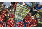 商务部:上周食用农产品价格比前一周涨0.4%
