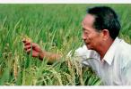 袁隆平:我还有两个梦 要让杂交水稻走向世界