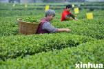 实施精品工程 休闲农业成河北农民增收新渠道
