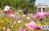6大类24项!河北省第3届园林博览会28日在邢台举行