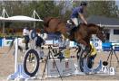 """军运会特殊""""运动员""""114匹比赛用马全部抵达"""