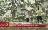 【央視關注河南六穩六保】衛輝:水果基地帶動增收效果好