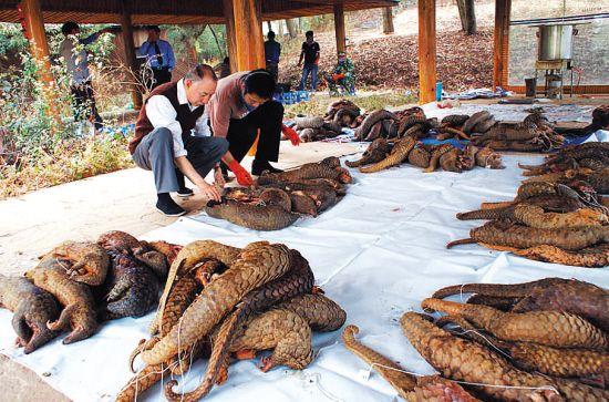 濒危野生动物制品罪追究刑责