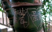 """武汉植物园的""""爱情宣言"""""""