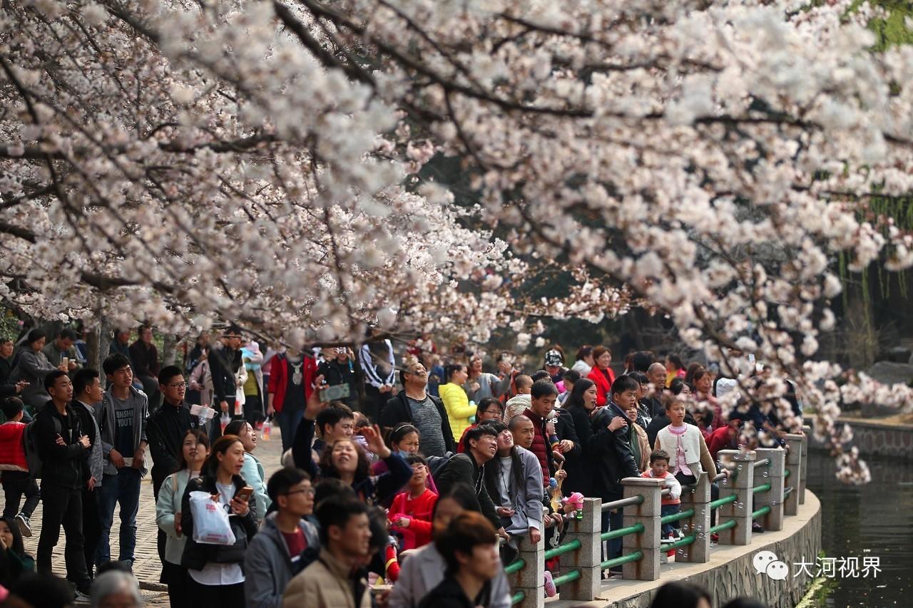人民公园樱花美景。
