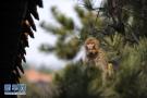 气温回暖 承德景区野生猕猴出山咯!