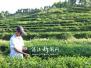 【湛江百镇行】廉江长山镇:长山茶绿了山头富了农家
