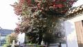一城纷纷扬扬的花事 扮靓泰州水城水乡