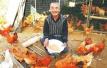 新年新气象乡村致富忙:汝阳县农民喂养生态鸡