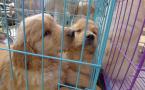 宠物医疗市场漫天要价 法律空白亟需要弥补