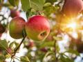 """中原大地上的三颗""""苹果"""":这个金苹果最瞩目"""