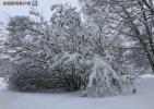 """俄罗斯莫斯科降下""""世纪大雪"""":2000多棵树被压倒"""
