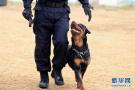 陕西咸阳:警犬训练保平安