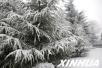 冷空气来袭气温大幅下降!山东半岛北部阴有小阵雪