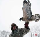 探访北京猛禽救助中心 猛禽重回蓝天他们一直在努力