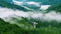 中国森林覆盖率达21.66% 今年拟造林超1亿亩