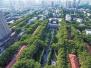 城市绿化该种什么树?郑州:雪松排名第一法桐国槐居次