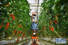 科技助力海南现代农业发展