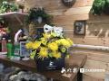 清明哈市鲜花销量增5% 菊花价格上涨2成