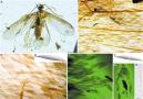 2亿年前昆虫啥颜色