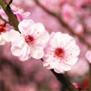 旅游局发布春季旅游指南