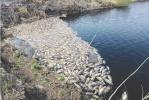 哈尔滨两鱼塘变污水池死鱼成片 疑因水体受污染