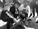 沧州村民捡到受伤大鸟 送去交林业部门救治
