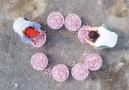 人民日报:江苏海安发展食用玫瑰相关产业 促进农民增收