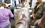 黑龙江3名渔民合力捕获996斤大鳇鱼 价值22万元