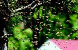 """养蜂人老李连续21年来青采蜜 看""""出走""""的蜂王"""