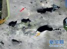 荷澳两国认定俄为MH17坠毁负责 或提交国际法庭