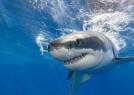 被大白鲨吃掉啥感觉