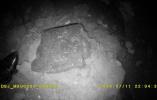 工人施工发现古墓 专家:或属南北朝时期