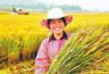金秋时节 农民脸上洋溢着丰收的喜悦