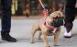 杭州加大养狗管理力度:规定遛狗时间,不拴狗绳或将没收犬只