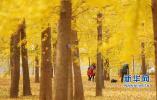 山东周末天气多云为主 最低温降至-2℃,快穿秋裤!
