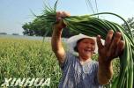 """冀州创新机制激活现代农业发展""""新动能"""""""