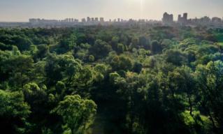 中国成为维持全球森林覆盖面积平衡的主要贡献者