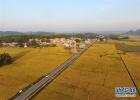 河北省夏糧收購全面展開 加大利用售糧APP預約力度