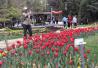 劳动公园春季游园会周六启幕 首次推出夜赏郁金香活动